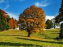 Garten- und Landschaftsbau Schauer